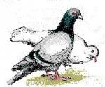 touquet,pigeons,dégradations